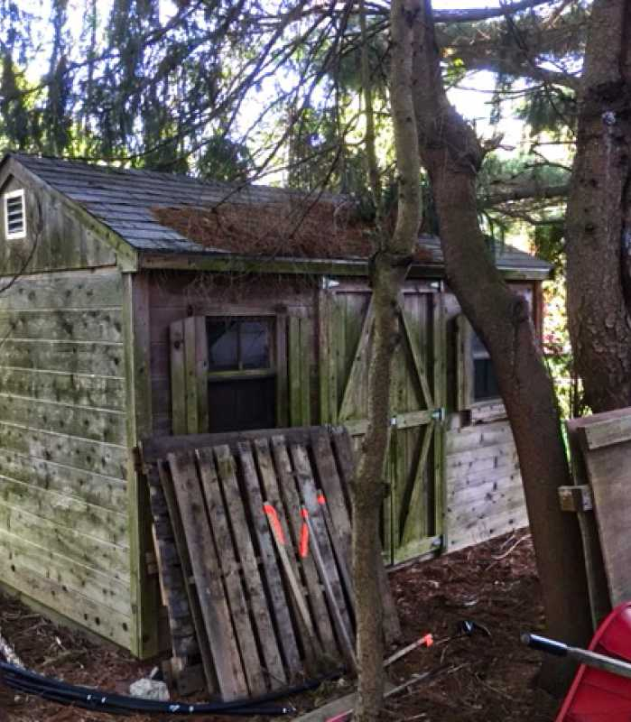 the old shed was in bad condition